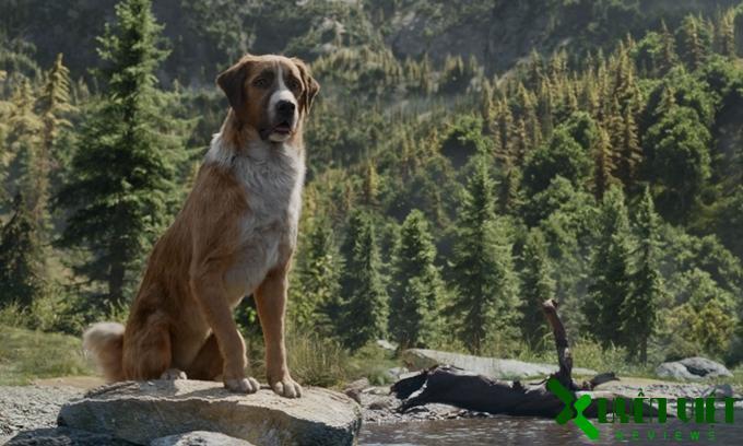 Hình ảnh của chú chó Buck khiến người đọc xúc động, ngập tràn cảm xúc